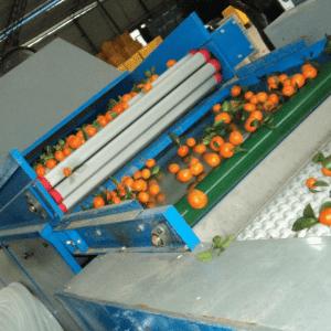 Automatic avocado / apple / pear /apricot processing grading / sorting machine