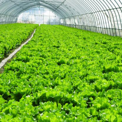 Small Scale Turkish Greenhouse Project For Fruits And Vegetables / Organic Greenhouse