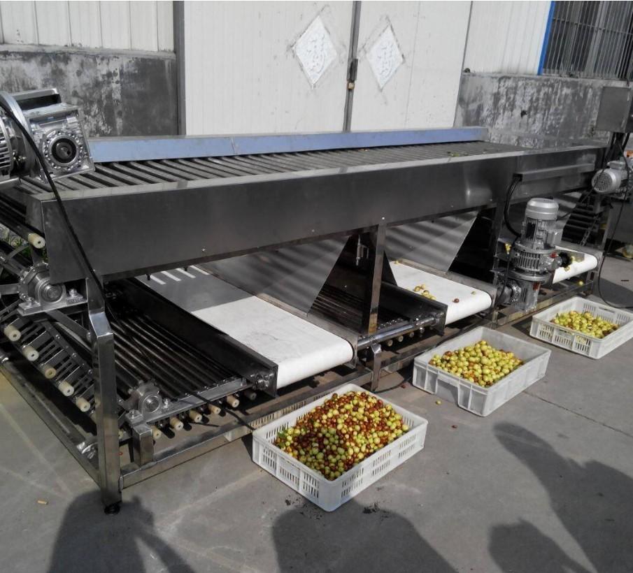 Advanced Designed Fruit Screw Tomato Grading Sorting Machine