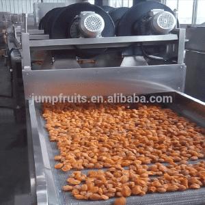 Semi-automatic apricot mango drying machine