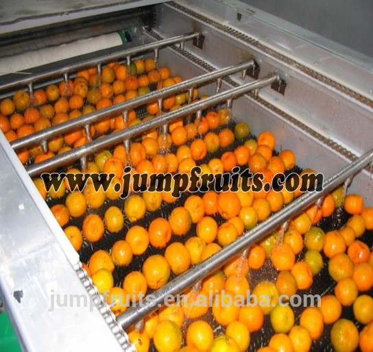 Industrial Fruit & Vegetable Washing Cleaning Machine