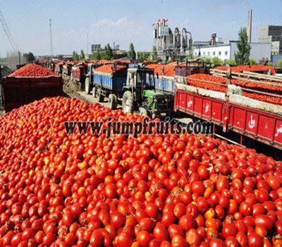 20 Ton Process Tomato Paste Plant