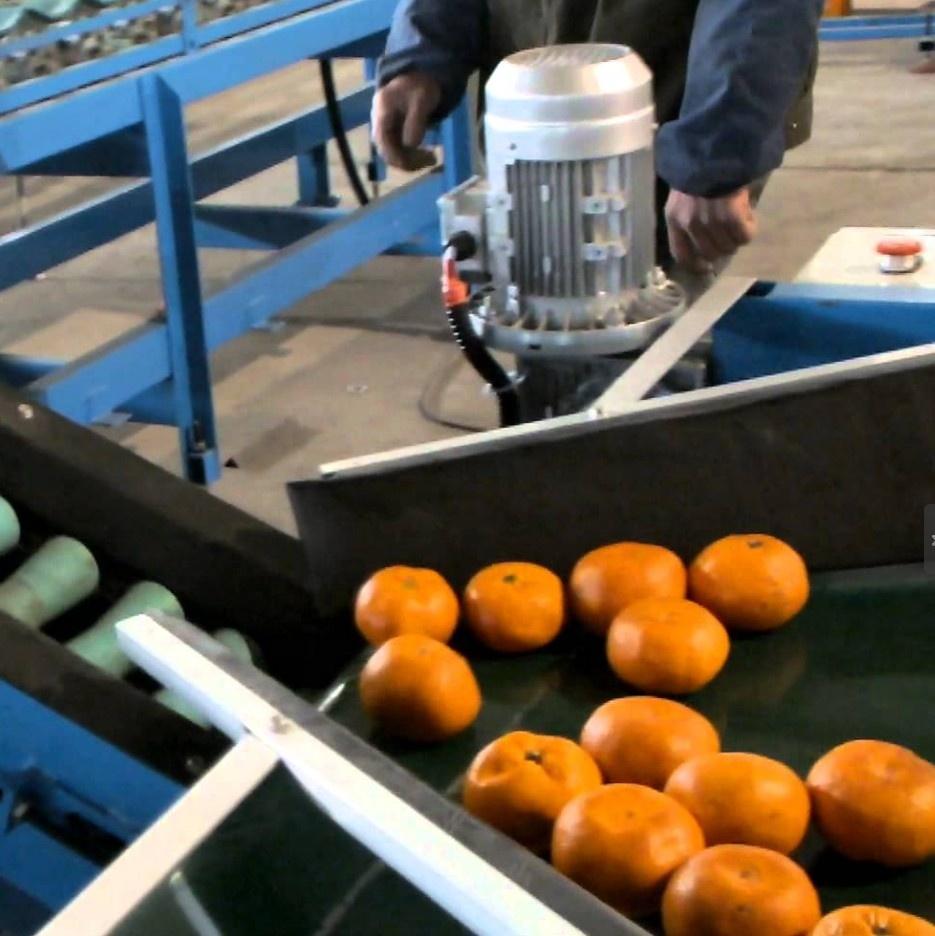 Automatic Orange Grading And Waxing Machine