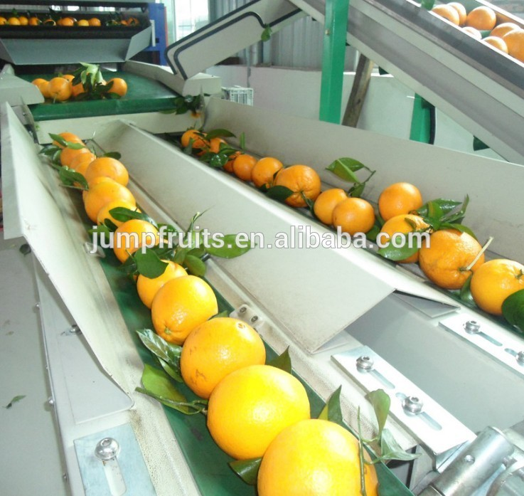 Industrial Fresh Fruit Washing Drying Sorting Waxing And Packing Line