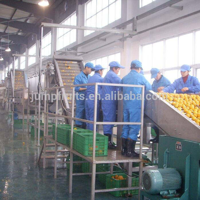 Industrial Automatic Fruit And Vegetables Photoelectric Sorting Machine