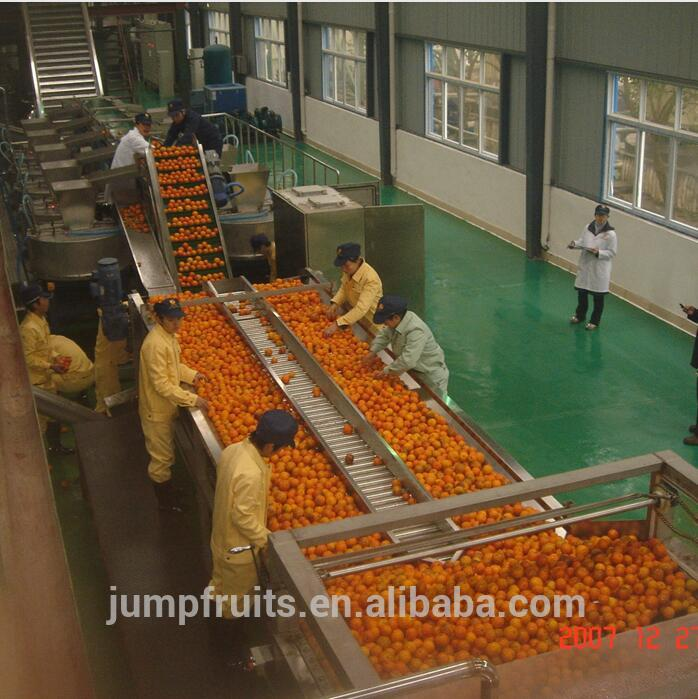 Fruit And Vegetable Sorting Plant